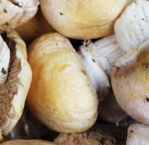 Консервирование, сушка и засолка грибов